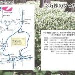 綱木クマガイ草への行き方